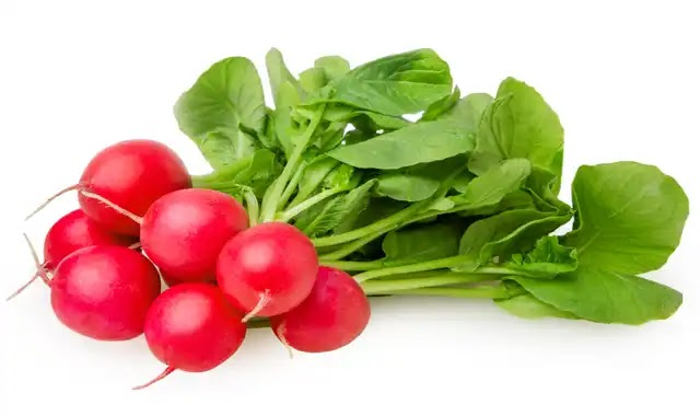 Benefits of radishes for the body and skin