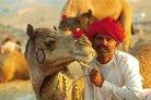 camel Festival ww.emitragovt.com