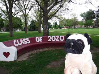 "a long, rounded bench is painted maroon with the words ""class of 2020"" in white. a plush pug is next to the bench."