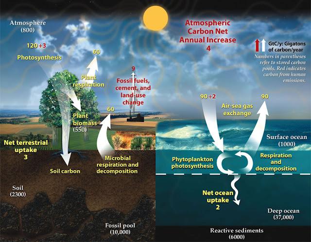 Ciclo del Carbonio