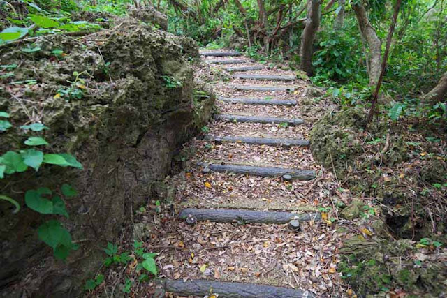 hiking, forest, Okinawa, trail,hill, steps