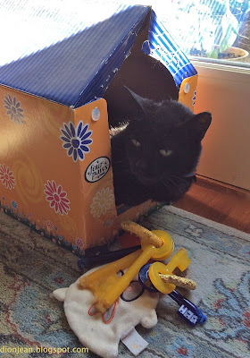 black cat in catnip house