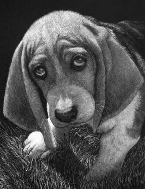 07-Guilty-Dog-Lorna-Hannett-Animals-Drawings-Scratched-out-of-Ink-with-the-Scratchboard-www-designstack-co