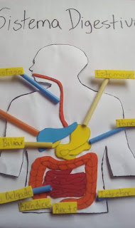 como hacer el sistema digestivo