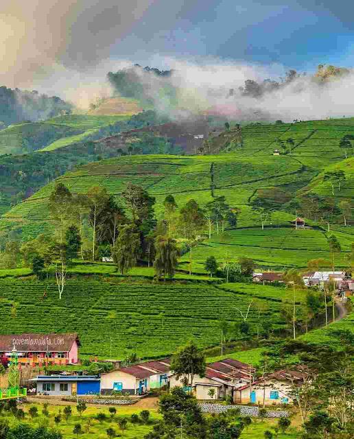 Agrowisata Kaligua Brebes: Lokasi, Rute, dan Harga Tiket