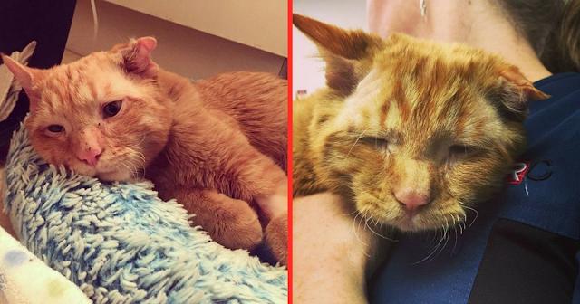 Кот был спасен от усыпления и уже через час преобразился в своем новом доме