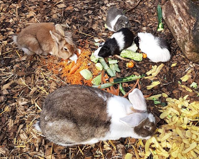 Vom Glück dieser Erde: Urlaub auf dem Küselhof und Reiterhof Witt auf Fehmarn. Kleintiere im Streichelgehege: Kaninchen, Meerschweinchen und Hasen, beim Füttern dürfen die Kids helfen.