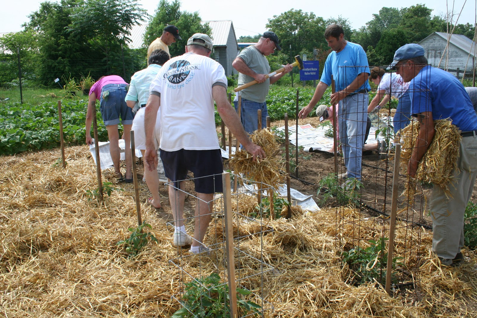 Franklin County (PA) Gardeners: Victory Garden 2012 Log