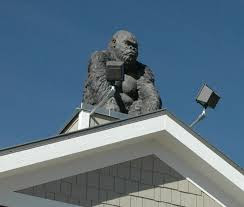 Gorilla on roof picture