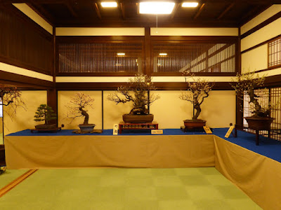 大阪天満宮・大盆梅展(盆梅と盆石展)