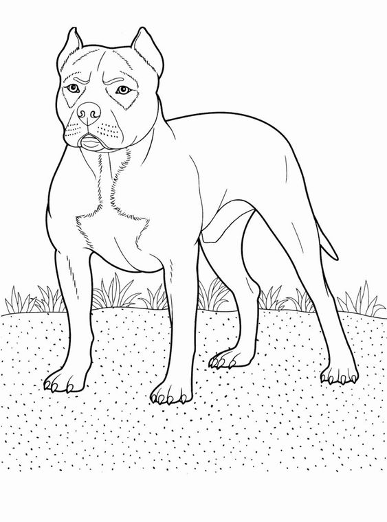 Dogs coloring pages 22