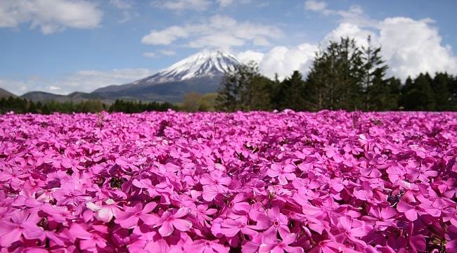 Pemandangan Cantik & Legenda Gunung Fuji 3