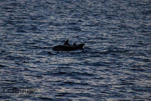 Vrsar, Kroatien, Delfine, Delfintour, Sonnenuntergang, Boot