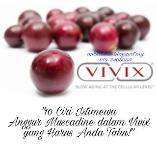 Ciri istimewa anggur muscadine dalam Vivix shaklee