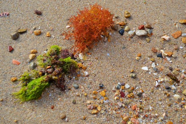 Alghe e sassolini