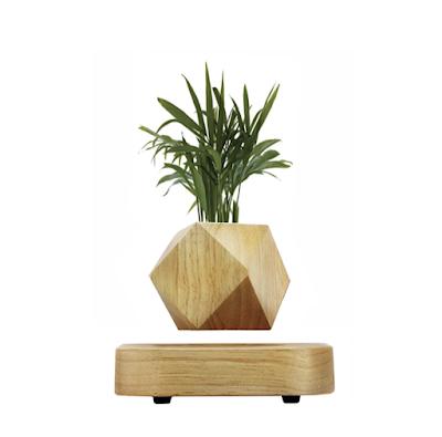 lampe à lévitation et plante
