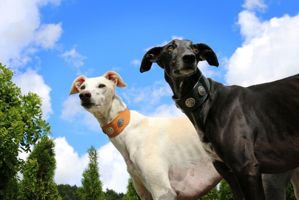 Las razas de perros que mejor se adaptan a un departamento ¿cuáles son y qué debemos tener en cuenta?