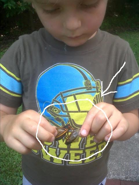 Anderson with cicadas