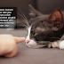Hati-hati bela kucing, parasit dari najisnya mampu jangkiti otak bayi menyebabkan microcephaly