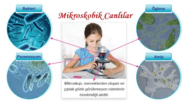 Mikroskobik Canlılar