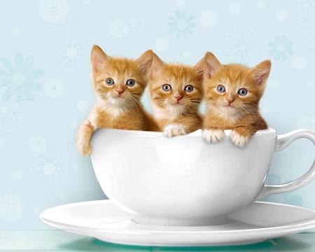 صور قطط جميلة %25D8%25B5%25D9%2588%25D8%25B1%2B%25D9%2582%25D8%25B7%25D8%25B7%2Bimages%2Bcats%2B%252821%2529