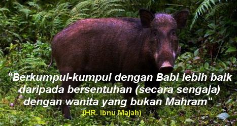 Kumpul Dengan Babi Lebih Baik Bagimu Daripada Menyentuh Yang Bukan Mahram