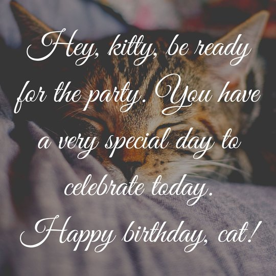 Birthday messages for cats