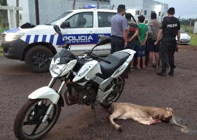 Candelaria: cuatro hombres fueron detenidos por robar y faenar animal vacuno