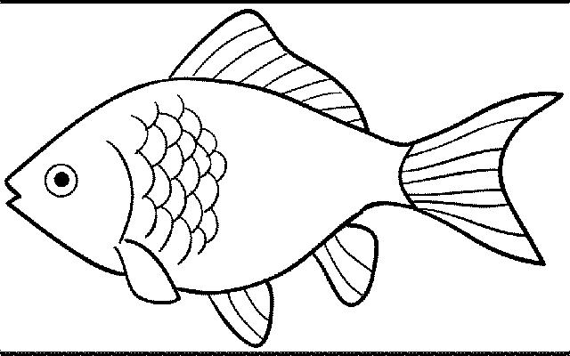 Gambar Ikan Hitam Putih Air Tawar Dan Laut Hias Serta Konsumsi