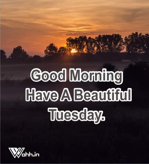 Best 51 Good Morning Tuesday Tuesday Quotes Wishes Wahh Hindi Blog