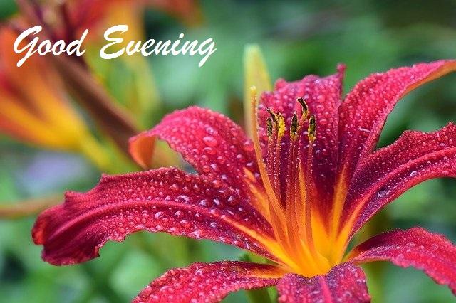 romantic good evening images