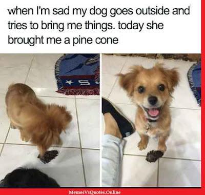 Cute Animals Memes