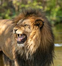 Wild Animals Name In Hindi and English With Pictures