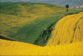 colline toscana - Curso de cerâmica na Toscana