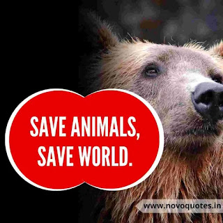 Save Wildlife Quotes