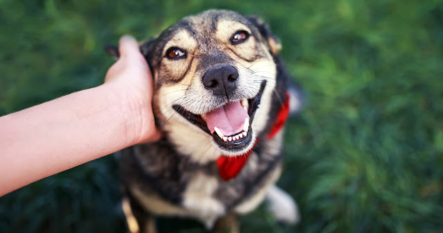How to adopt a pet ethically