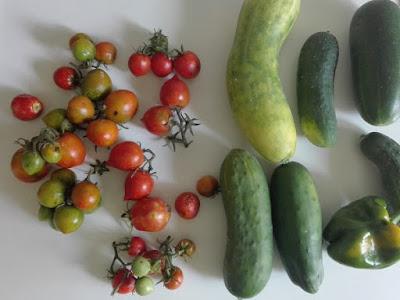 Orto di settembre: ultimi pomodori, cetrioli e peperoni