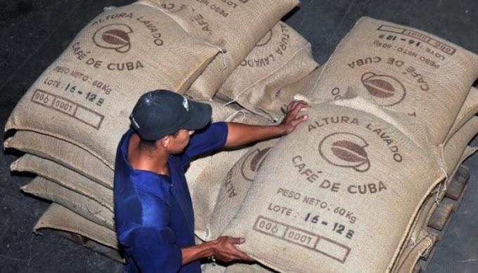Régimen planea que los cubanos dejen de tomar café y comiencen a tomar chícharo