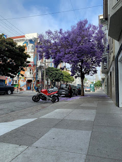 Purple Jacaranda tree with red motorcycle, colorful building and green port-a-potty in the distant background