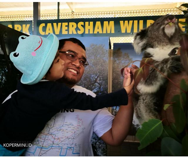 membelai koala di Caversham