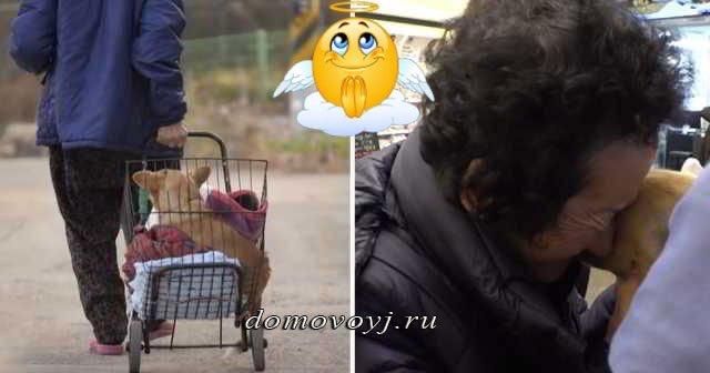 Бабушка спасает парализованного пса, которого прежние «хозяева» выкинули на свалку…
