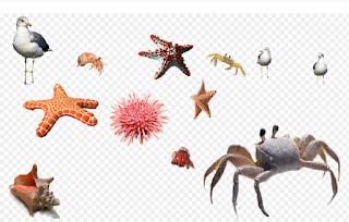 Klasifikasi Makhluk Hidup dan Penjelasannya Lengkap