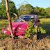 Auto compacto se impacta con un poste