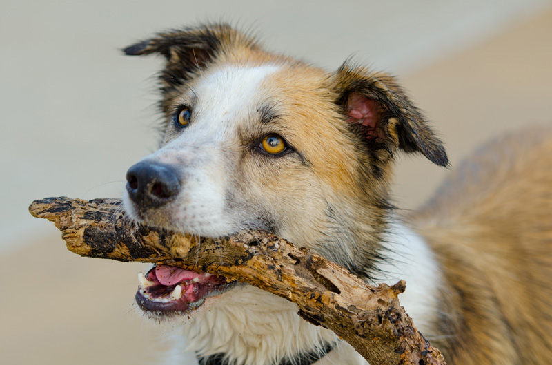 Image result for shelter dogs