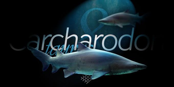 Carcharias taurus - Denizde bulabileceğiniz en büyük köpekbalıkları - 8