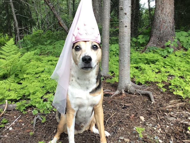 A dog wearing a princess hat sits on the edge of the forest. The Prince and the Pea is the canine fairy tale to make you happy right now.