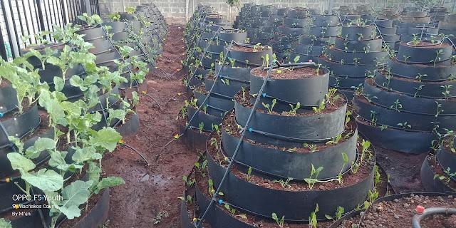 multistorey farming system Kenya