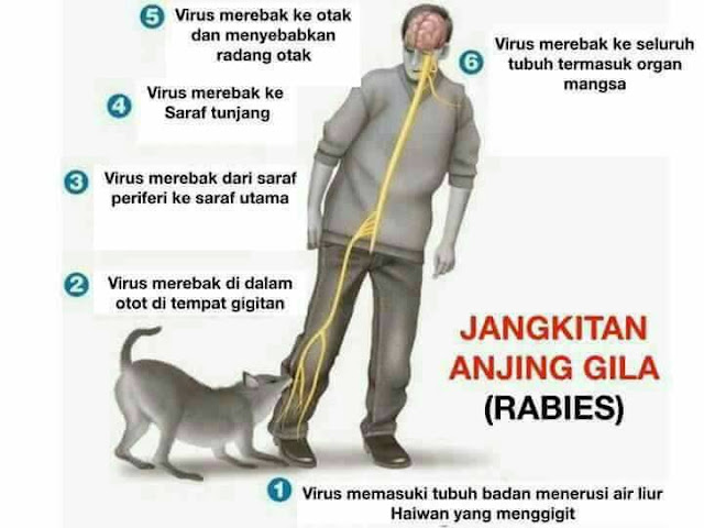 Image result for apa itu virus rabies