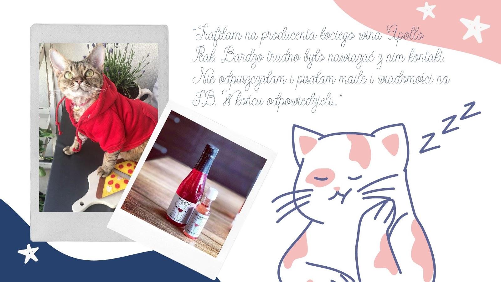 5 prezent dla kota dla właściciela kota wino szampan dla kota drapak miska eko friendly zabawki dla kota bez chemicznych dodatków i syntetycznych materiałów wyprawka dla małego kota co kupić