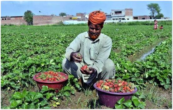 Jom Lihat Kehidupan Seharian Di Negara Pakistan Dairishare